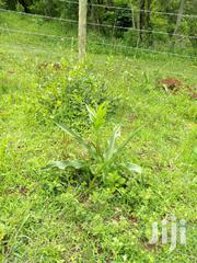 3 Adjacent Plots In Webuye For Sale | Land & Plots For Sale for sale in Bungoma, Bukembe West