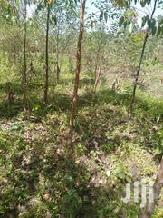 Half Acre On Nyapara Bungoma Malakisi | Land & Plots For Sale for sale in Bungoma, Malakisi/South Kulisiru