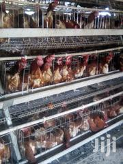 Battery Chicken Cages | Farm Machinery & Equipment for sale in Nairobi, Kasarani
