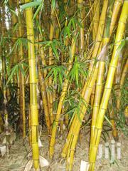 Bamboo Posts And Sticks. | Feeds, Supplements & Seeds for sale in Kiambu, Limuru Central