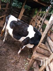 Pure Freshian Heifer One Month Gestafion Period | Livestock & Poultry for sale in Kiambu, Kiganjo