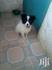 Cute Puppy On Sale | Dogs & Puppies for sale in Machakos, Syokimau/Mulolongo