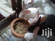 High Breed Rabbits Rabbit Structures Rabbit Pots Rabbit Drinkers | Other Animals for sale in Nairobi, Ruai