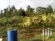 Tamarilo Fresh Fruits On Sale | Meals & Drinks for sale in Kiambu, Juja