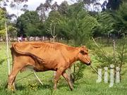 Dairy Cows | Other Animals for sale in Nyandarua, Gathara