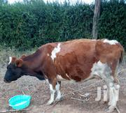 Jersey Cow For Sale   Other Animals for sale in Kiambu, Ndeiya