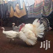 Fertilized Turkey Eggs | Livestock & Poultry for sale in Kiambu, Kabete