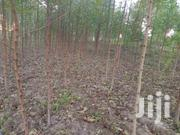Land With Eucalyptus Trees - Bungoma | Land & Plots For Sale for sale in Nairobi, Nairobi West