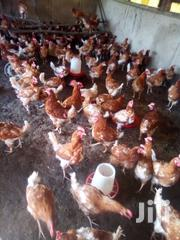 Ex-layers Hens Needed | Livestock & Poultry for sale in Nairobi, Makongeni