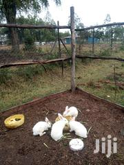 Rabbits For Sale | Livestock & Poultry for sale in Kisumu, Manyatta B