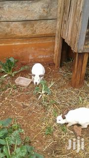 Any White Rabbits | Other Animals for sale in Nairobi, Kahawa West