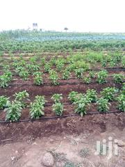 Prime Plots For Sale | Land & Plots For Sale for sale in Kajiado, Kaputiei North