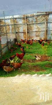 Kienyenji Corks | Livestock & Poultry for sale in Machakos, Athi River