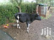 Freshian Cow | Other Animals for sale in Uasin Gishu, Kuinet/Kapsuswa