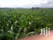 Nakuru Land On Quick Dale | Land & Plots For Sale for sale in Nakuru, Solai