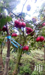 Tree Tomato 100 Per Kg | Meals & Drinks for sale in Elgeyo-Marakwet, Chepkorio