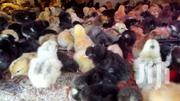 Selling 1st Generation Improved Kienyeji (Kuroiler) Chicks | Livestock & Poultry for sale in Kajiado, Ongata Rongai