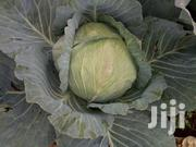 Gloria Cabbage F1 | Feeds, Supplements & Seeds for sale in Trans-Nzoia, Saboti