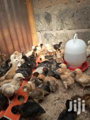 1week Healthy Improved Kienyeji Chicks | Livestock & Poultry for sale in Nairobi, Komarock