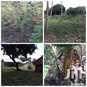 4 Acres Piece Of Land | Land & Plots For Sale for sale in Makueni, Kikumbulyu South