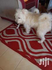 Selling My Dogs And Puppies For An Affordable Price! | Dogs & Puppies for sale in Mombasa, Bamburi