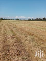 Balled Hay(Wheat Mix) | Feeds, Supplements & Seeds for sale in Nakuru, Mosop