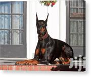 Doberman Pure Bred | Dogs & Puppies for sale in Nairobi, Nairobi West