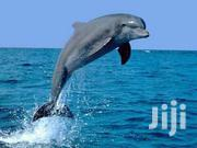 Dolphin Tour | Travel Agents & Tours for sale in Mombasa, Shanzu