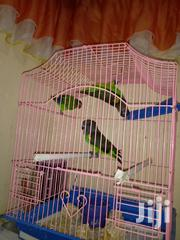 Meyor Parot | Birds for sale in Nairobi, Nairobi Central