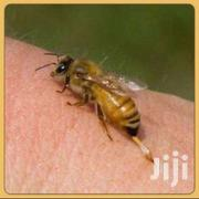 Expert & Affordable Bee And Wasp Removal .24hr Bee Removal Service   Other Services for sale in Homa Bay, Mfangano Island