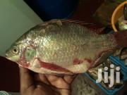 Tilapia Fish | Meals & Drinks for sale in Nairobi, Ngara