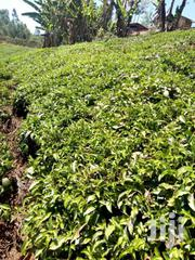 4.5 Acres In Murang'a Gatanga Gatura With Tea & Touching River Chania | Land & Plots For Sale for sale in Murang'a, Gatanga