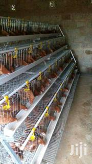 Chicken Cages For 384birds | Livestock & Poultry for sale in Nairobi, Kasarani