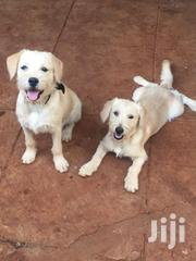 Dogs Pappy White Breed | Dogs & Puppies for sale in Nairobi, Kileleshwa