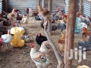 Breeding Cocks Or For Meat | Livestock & Poultry for sale in Nairobi, Embakasi