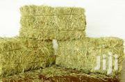 Hay Pure Boma Rhodes | Feeds, Supplements & Seeds for sale in Narok, Ololulung'A