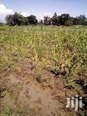 5 Acres at Matanya, Nanyuki for Sale | Land & Plots For Sale for sale in Laikipia, Tigithi