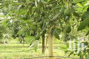 1 Acre Orchard Drip Irrigation | Farm Machinery & Equipment for sale in Nairobi, Nairobi Central