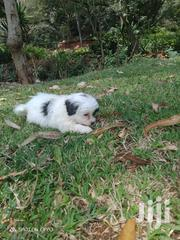 House Pets | Dogs & Puppies for sale in Nairobi, Kileleshwa