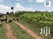 50 Acres For Sale | Land & Plots For Sale for sale in Nakuru, Njoro