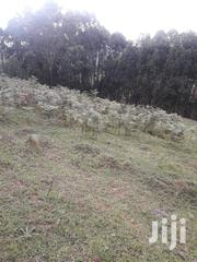 3 Ha.Of Land | Land & Plots For Sale for sale in Nyamira, Nyansiongo
