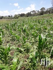 1/2 Ha Of Land | Land & Plots For Sale for sale in Nyamira, Nyansiongo