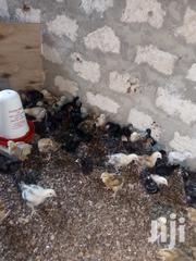 1month Old Kienyeji Chicks | Livestock & Poultry for sale in Mombasa, Shanzu
