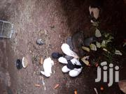Rabbits And Bunnies For Sale | Other Animals for sale in Nairobi, Karen