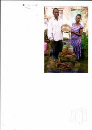 Moringa Seeds For Sale   Feeds, Supplements & Seeds for sale in Kakamega, Mumias Central