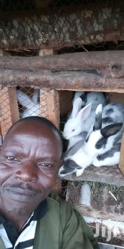 Rabbits, 6 Adults & 30 Kits | Livestock & Poultry for sale in Nakuru, Lanet/Umoja