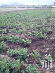 Plots And Lands For Sale In Longonot | Land & Plots For Sale for sale in Nakuru, Olkaria