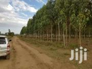 5 Acres At Naivasha Kongoni ( Moi-ndabi) | Land & Plots For Sale for sale in Nairobi, Karen