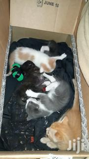 Adorable Kittens Looking For A Home | Cats & Kittens for sale in Kajiado, Ongata Rongai