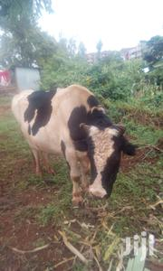 Bull Cow For Sale Ruaka Gacharage | Other Animals for sale in Kiambu, Ndenderu